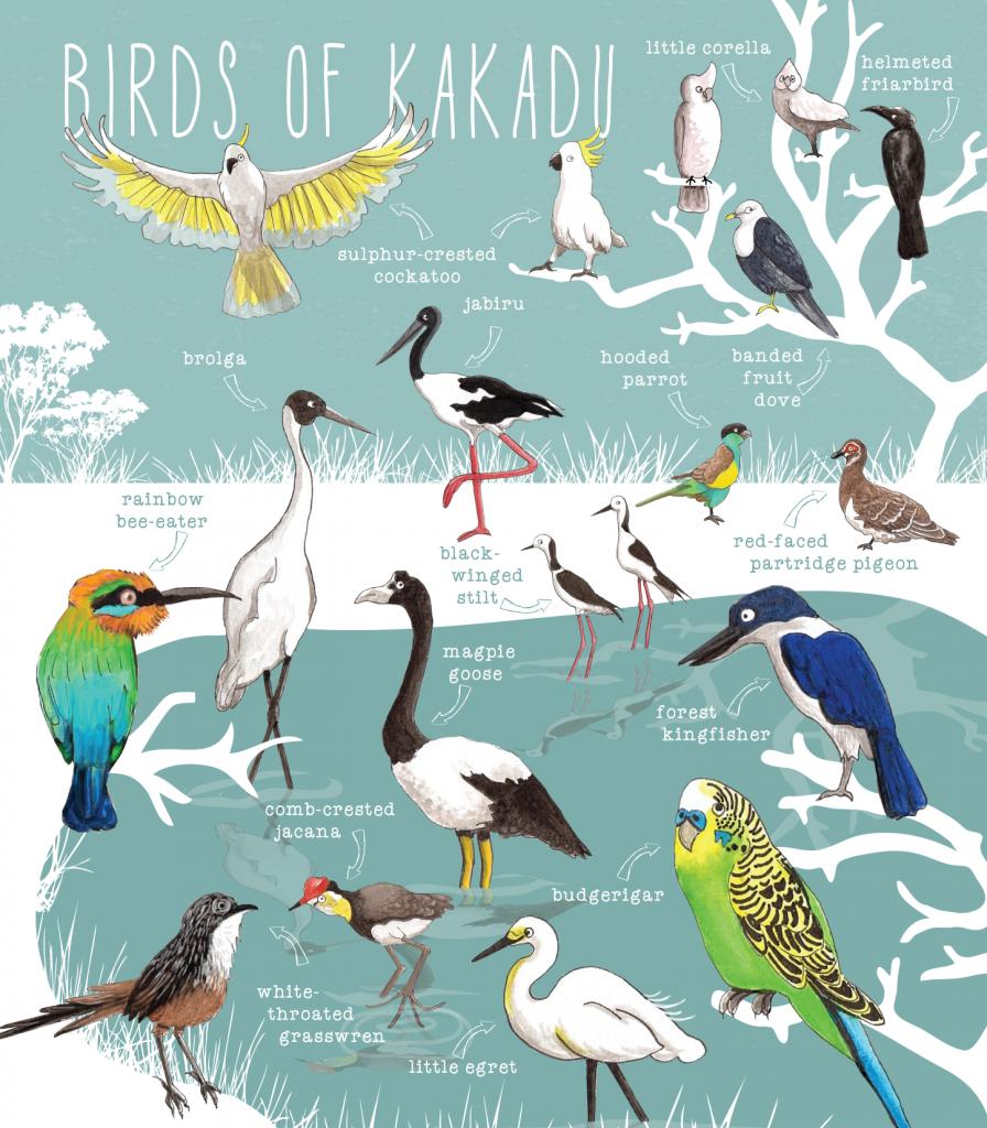 087-nt-birds-of-wetlands